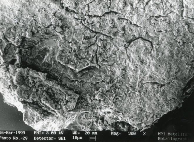 Malschichtpartikel mit Schimmelsporen und -hyphen. Foto: P.-B. Eipper/Max-Planck-Institut Stuttgart
