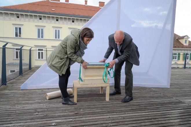 Sarah Bildstein, Der Bien, 2015, Foto: Universalmuseum Joanneum/N. Lackner