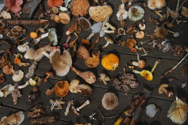 Graz, Mariatrost, Hauenstein: Pilzausstellung beim Gasthof Meinhart, Foto: Ilse Wendelin