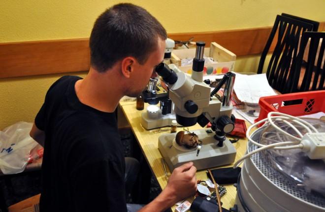 Gernot Friebes mikroskopiert einen Steinpilz, Foto: J. Hold