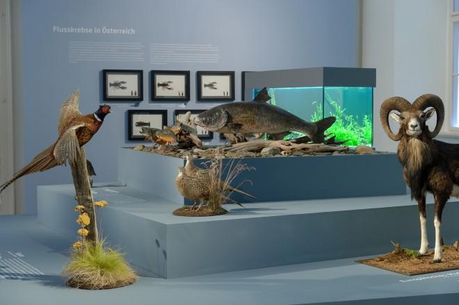 """Ausstellungsansicht, """"Weltenbummler"""", Foto: Universalmuseum Joanneum/N. Lackner"""