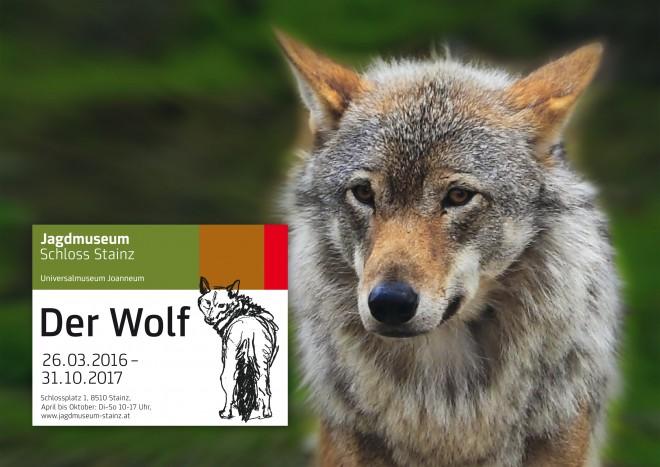 Steht im Jagdmuseum im Mittelpunkt: Der Wolf; Foto: KH Wirnsberger