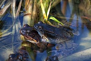 Heimische Amphibien und Reptilien stehen von April bis Juli im Blickpunkt. Foto: Werner Kammel
