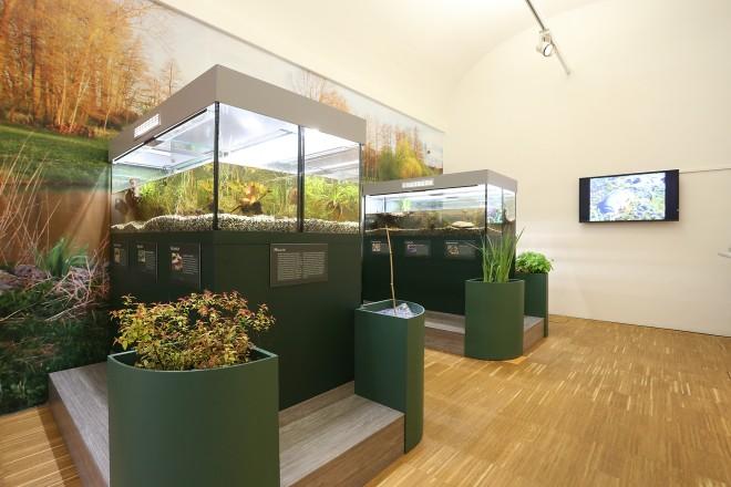 """Ausstellungsansicht """"Kröten, Schlangen & Co"""", Foto: Universalmuseum Joanneum/J.J. Kucek"""