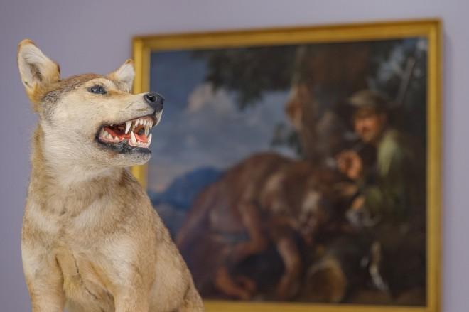 Ausstellungsansicht Der Wolf, 2016/Foto: Universalmuseum Joanneum/N. Lackner