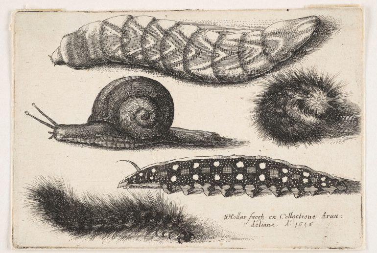 Wenzel Hollar (1607–1677), Schmetterlinge, Motten, Käfer, Raupen und Schnecke, Aus der Serie: Muscarum Scarabeorum, Antwerpen 1646, Radierung, Alte Galerie, Inv.-Nr. AG.K. 8630 und 8632, Foto: UMJ