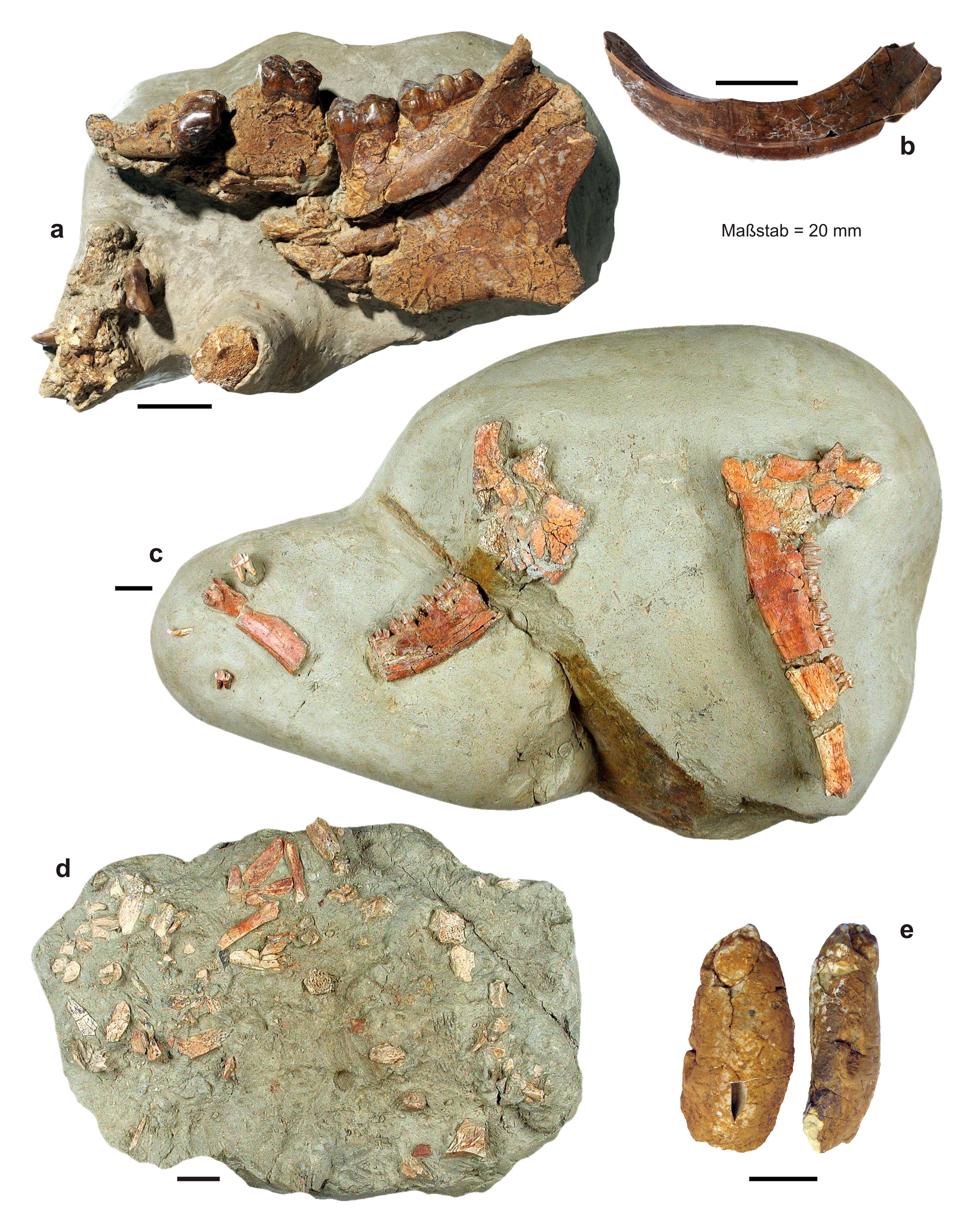 tübingen fossile uhren
