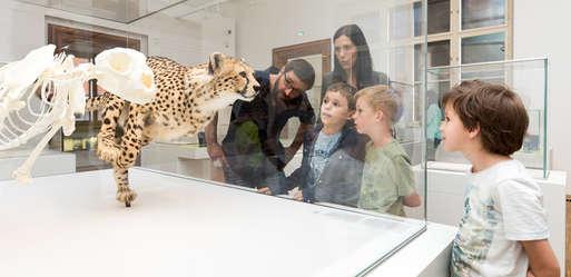 Familienführung im Naturkundemuseum,