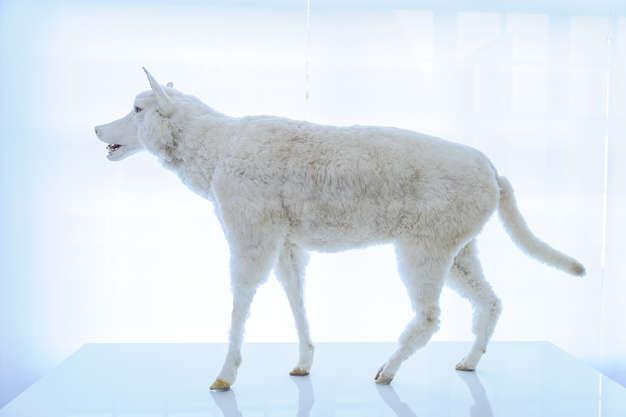 der wolf ausstellung jagdmuseum und. Black Bedroom Furniture Sets. Home Design Ideas