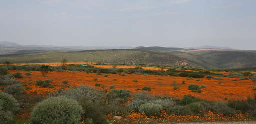 Namaqualand-Nationalpark im August. Foto: M. Pinter