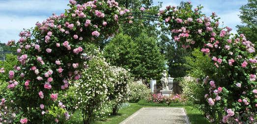 Rosenbogen im Venusgarten, Foto: Universalmuseum Joanneum / Jare