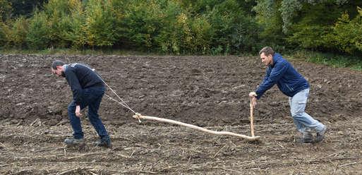 Die Archäologen Daniel Modl (links) und Marko Mele (rechts) pflügen das Feld wie vor 7.000 Jahren,