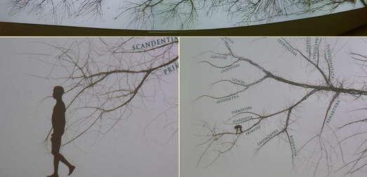 Stammbaum aus dem MUSE (Museo delle Scienze;Musem für Wissenschaft) in Trient. Foto: H. Zwander