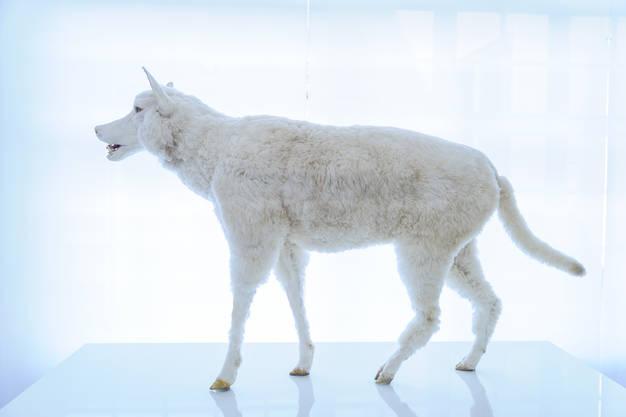 der wolf ausstellung jagdmuseum schloss stainz. Black Bedroom Furniture Sets. Home Design Ideas