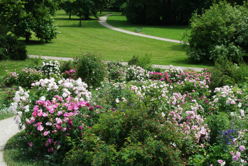 Old Roses in Eggenberg - Gardens | Schloss Eggenberg and Gardens